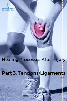 Part 3- Tendon and Ligament Healing